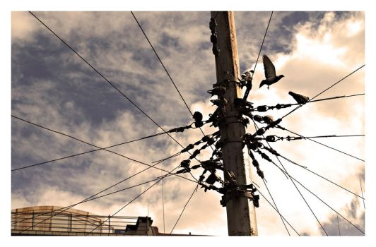 Wired doves by TodorBozhinov