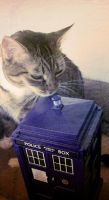 the cats have the tardis by nna