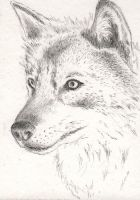 Wolf sketch ACEO by lunarhare