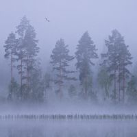 Fogscape by JuhaniViitanen