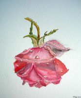 Rose d'Hiver 2 by manette64
