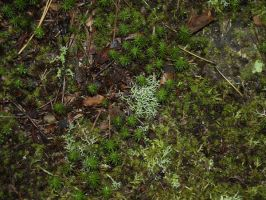 Forest Floor by Irie-Stock