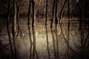 Reflections of a cold day by firesign24-7