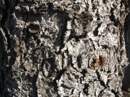 Bark Texture 1 by Freedom-Falling