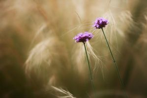 Flowers by clippercarrillo
