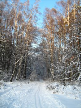 winter forest 2 by photoyogin