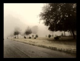 Misty Morning by naini