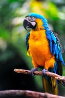 colourful parrot by GregoriusSuhartoyo
