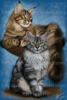.:maine coon:. by alex-lp