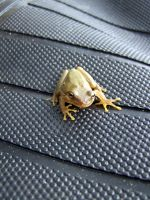 Small Froggy 4381909 by StockProject1