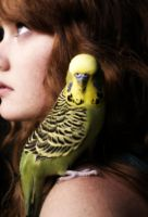 Budgie by thelittlerthings