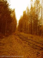 old railway in the woods by LindaMarieAnson