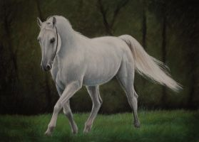 white arabian by PASTELIZATOR