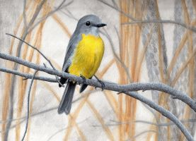Eastern Yellow Robin (Eopsaltria australis) by gouldian-finch
