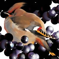 WAXWING by SGHILLUSTRATION