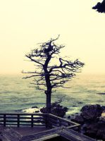 Lonely Tree by EmptyHeartsPhotos