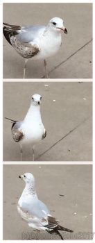 Seagull Says Bye by CarolinesEcho