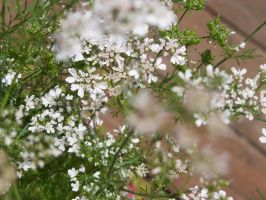 RCP 1: Flower Flurries by MoPotter