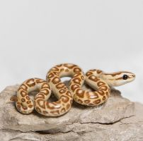 Snake Figurine by RamalamaCreatures