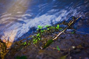 leaves by the water by Emmatyan