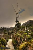 Cradle Mountain HDR by munchinees