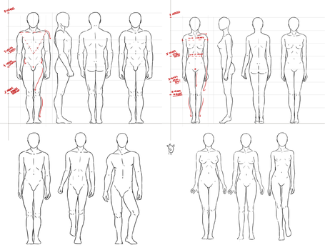 Anatomy - simple standing pose by NImportant