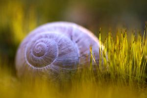 Snail On A Moss Bed by nele102