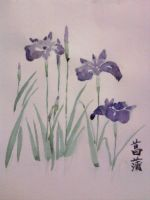 ayame - iris- chinese brush painting by eureka48