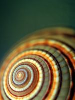 Shell by GRoz