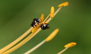 Native bees at work by CouchyCreature