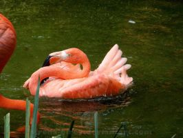 Compact Flamingo =) by sirena-pirey