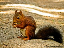 Squirrel 8 by kitty974