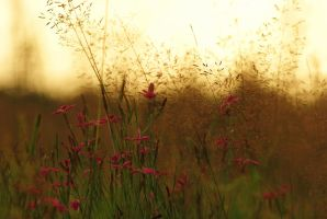 Through the Meadow by Serjia