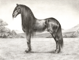 Friesian Study by Misted-Dream
