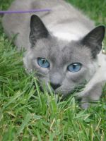 Pico in the grass by sophatizer