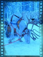 Reindeer by thaonguyenp27