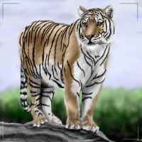 oekaki tiger 06 by wildtoele