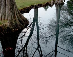 Reflected Trees by poisonrain