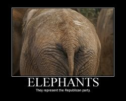 Elephants by Birther
