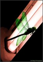 Dragonfly by galpeleg