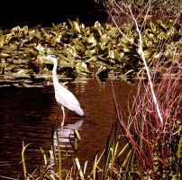 Heron by Ionday