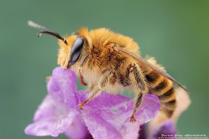 Bee by patrykcyk