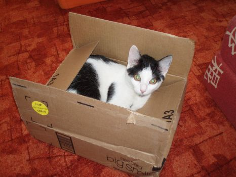 Cat Cargo by CatFromDream