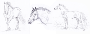 Horse Sketches by Jullelin