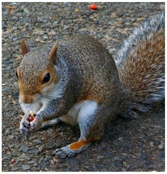 Nuts About Nuts  3 by Forestina-Fotos