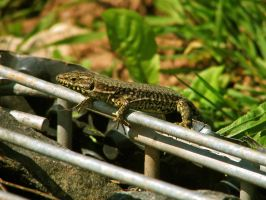 lizard 19 by Pagan-Stock