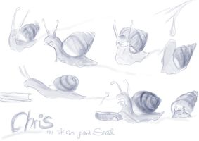 Chris, the giant snail by abosz007