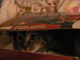 Kitty in a really cramped box. by GalaxyGirl5