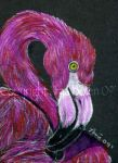 Greater Flamingo ACEO by The-GoblinQueen