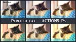 Perched cat  ACTIONS Ps by Tetelle-passion